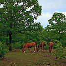 Under the Oak by Sharon Morris