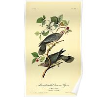 James Audubon Vector Rebuild - The Birds of America - From Drawings Made in the United States and Their Territories V 1-7 1840 - Band Tailed Plover or Pigeon Poster
