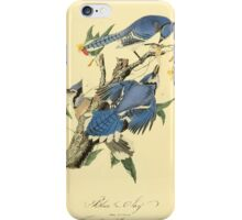 James Audubon Vector Rebuild - The Birds of America - From Drawings Made in the United States and Their Territories V 1-7 1840 - Blue Jay iPhone Case/Skin