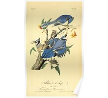James Audubon Vector Rebuild - The Birds of America - From Drawings Made in the United States and Their Territories V 1-7 1840 - Blue Jay Poster