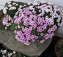Garden Troughs and Planters by Betty Mackey