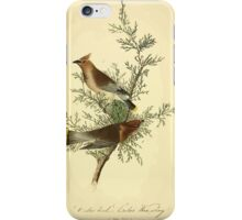 James Audubon Vector Rebuild - The Birds of America - From Drawings Made in the United States and Their Territories V 1-7 1840 - Cedar Bird or Cedar Waxwing iPhone Case/Skin