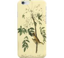 James Audubon Vector Rebuild - The Birds of America - From Drawings Made in the United States and Their Territories V 1-7 1840 - White Eyed Vireo or Greenlet iPhone Case/Skin