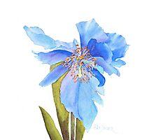 Blue Poppy Extraordinaire Photographic Print