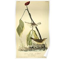 James Audubon Vector Rebuild - The Birds of America - From Drawings Made in the United States and Their Territories V 1-7 1840 - Aquatic Wood Wagtail Poster