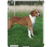 Fluffy Hungarian Wire-Haired Vizsla