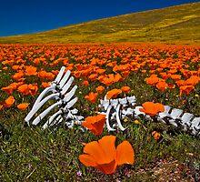 Poppies and Bones by photosbyflood
