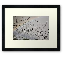Rainbow Swarm Framed Print