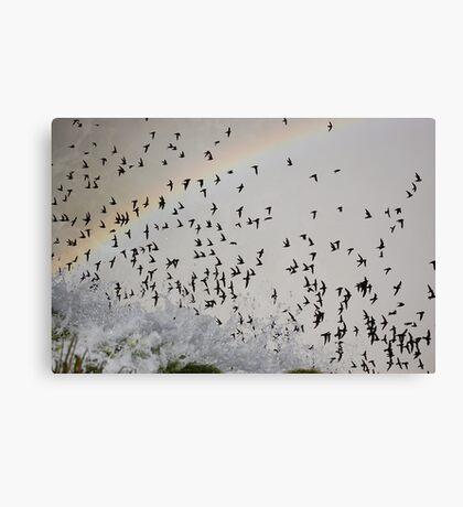Rainbow Swarm Canvas Print