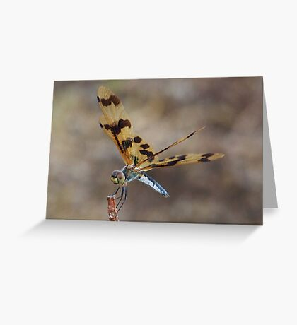 Brown Wing Dragonfly - Kakaud, Nothern territory Greeting Card