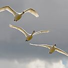 Three Swans a Flying by Richard Heeks
