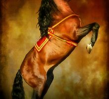 Andalusian Stallion by missmoneypenny