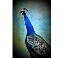 Peacock Blue Photographic Print