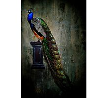 On a pedestal Photographic Print