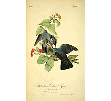 James Audubon Vector Rebuild - The Birds of America - From Drawings Made in the United States and Their Territories V 1-7 1840 - White Headed Plover or Pigeon Photographic Print