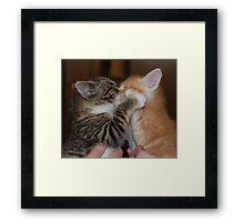 Kissing Kittens Framed Print