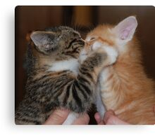 Kissing Kittens Canvas Print