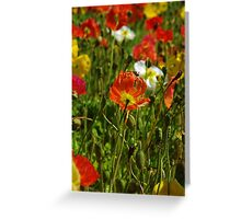 Californian Poppies Greeting Card