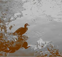 Duck Pond - Sepia by moonshinepdise
