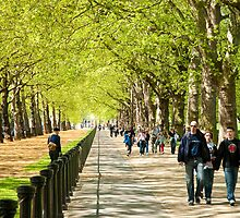 Green Park Buckingham Palace London by DonDavisUK