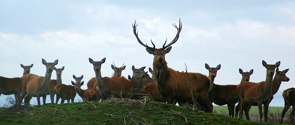 Red Deer by Durotriges