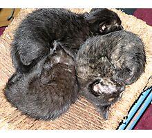 Kitty Pile Photographic Print