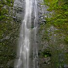 Manoa Falls by photosbyflood