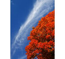 Fall at Tufts Photographic Print