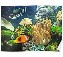 Coral Reef by epeaches Poster