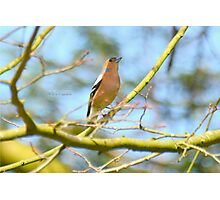 """"""" Singing To The Blue Sky """" Photographic Print"""