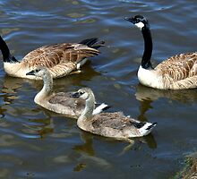 Family on the Move by LindaE
