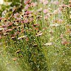 Daisies in the Rain by Buckwhite