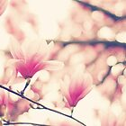 Pink Magnolia by Kristybee