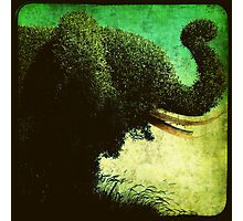 Ttv: Elephant Topiary Photographic Print