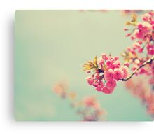 Cherry Spring Canvas Print