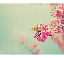 Cherry Spring Photographic Print