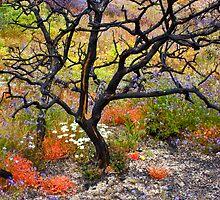 Lone Tree in the Flower Fields by photosbyflood