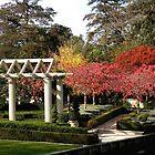 Autumn at Christchurch Gardens New Zealand by sandysartstudio