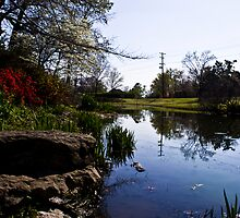 Woodward Pond by FranSanstead