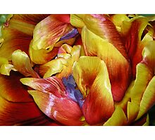 One special tulip for Tina Photographic Print