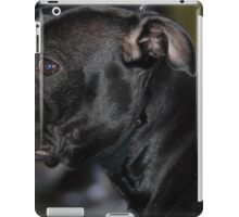 Furry Staffordshire Bull Terrier