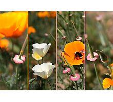 poppy bees & me Photographic Print