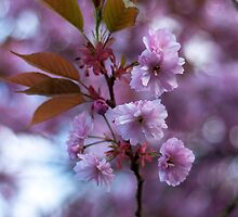 Blossom by scott  H