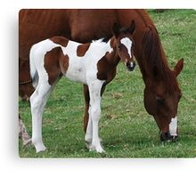 Foal and Mare Canvas Print