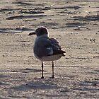 Seagulls by Liamsmom
