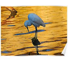 snowy Egret at Twilight Poster
