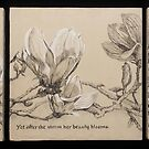 Magnolia Charcoal Drawing Triptych by Alice McMahon