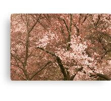 Blossom Clusters Canvas Print