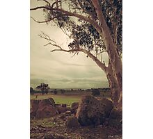 Eldorado Gumtree Photographic Print