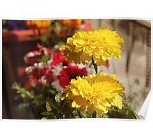 Yellow flower in a little garden Poster
